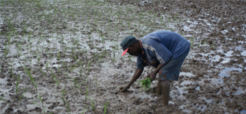 Délai prolongé pour l'appel à contribution : « Évolution des structures agraires et installation des jeunes en agriculture »