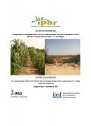 Comprendre les changements dans l'accès et l'utilisation de la terre par les populations rurales pauvres en Afrique Subsaharienne : Cas du Sénégal