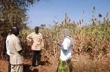 Suivi-évaluation du programme de récupération des terres PAM / FAO au Niger
