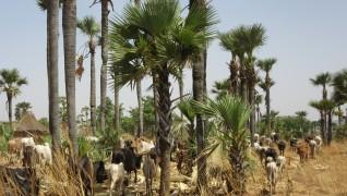 """Nouvelle publication : """"La formalisation des droits sur la terre dans les pays du Sud"""""""