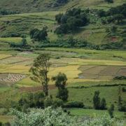 Quelles implications foncières pour les Zones Economiques Spéciales ? Etude croisée au Sénégal et à Madagascar.