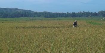 Structures agraires et accès des jeunes à la terre dans les pays du Sud : démarrage du chantier de travail du CTFD